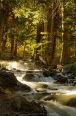 A stream flowing gently through the forest — Stock Photo
