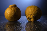Sumo Oranges — Stock Photo