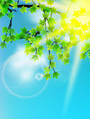 Sun beams and green leaves. — Stock Vector