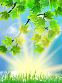 Eco background - green leaves, grass, bright sun. — Vecteur