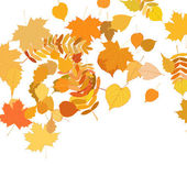 Autumn leaves falling and spinning on white. — Vector de stock
