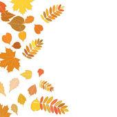 Podzimní listí, klesá a točí na bílém pozadí. — Stock vektor