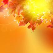 Delicate najaarszonnetje met schittering op gouden hemel. — Stockvector