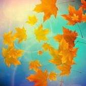 Красивые осенние листья. — Cтоковый вектор