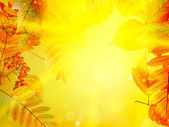 Autumn foliage background. — Stock Vector