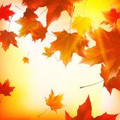 微妙秋日的阳光与金天空上眩光. — 图库矢量图片