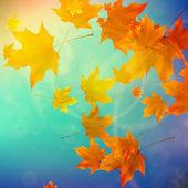 Las hojas de otoño hermoso. — Vector de stock