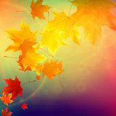 美しい秋の紅葉. — ストックベクタ