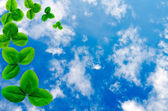 The sky with a shamrock — Stock Photo