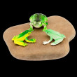 Toy frogs on a stone — Stock Photo #50120245
