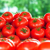 Fresh tomatoes outdoor — Stock Photo