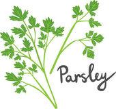 Parsley — Stock Vector