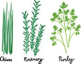 Fresh Herbs Set with Names — Stock Vector