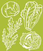 Cool Lettuce Selection Set — Stock Vector