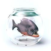 Iranha in glass aquarium — Stock Photo