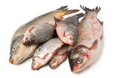 Group of raw fish — Stock Photo