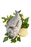Raw dorado fish with hebs and lemon — Stock Photo