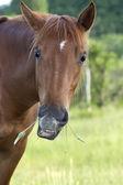 śmieszne konia — Zdjęcie stockowe