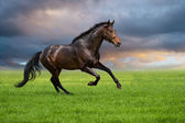 Horse gallop on a green grass — Stock Photo
