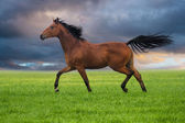 Horse trott on a green grass — Stock Photo