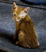 Gato en la calle — Foto de Stock