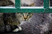 Cat on the street — Stock Photo