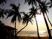 Palms silhouettes against sun. — Stock Photo