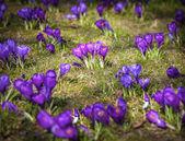 Spring landscape, vignetting effect. — Stock Photo