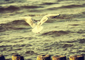 Filtered Vintage Retro Styled bird on the sea. — Stock Photo