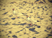 Filtered Vintage Retro Styled bird on the beach. — Stock Photo