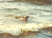 Dog swimming in sea done with a retro vintage instagram filter. — Stock Photo