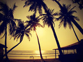 Palms silhouettes against sun, vintage retro style, Goa, India. — Stock Photo