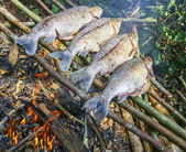 Grilling fish on campfire in forest. — Stock Photo