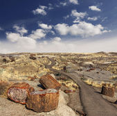 Path in Petrified Forest National Park, Arizona, USA. — Stock Photo