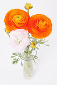 Orange and pinkish Buttercups in glass vase on white — Stockfoto