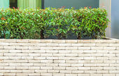 The beautiful decorative plant on the modern wall — Stock Photo