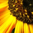 Stock Photo: Sumer time yellow flower