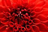 Sumer time flower — Stock Photo