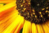 Sumer time yellow flower — Stock Photo