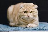 猫肖像 — 图库照片