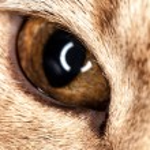 One cat eye macro closeup — Stock Photo #49874621