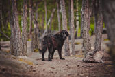 Lost a homeless dog in the woods — Stock Photo