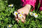 Child picking daisies — Photo