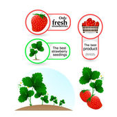Illustration vector plants of the strawberries — Stock Vector