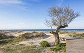 Beach of Berria, in Santona, Cantabria (Spain). — Stock Photo