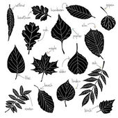 Collection of different kinds of leaves — Stock Vector