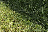 Cutting edge from cut and uncut grass in meadow — Stock Photo