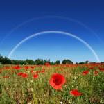 Poppy field rainbow — Stock Photo