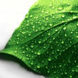 Water Drops on Green Plant Leaf — Stock Photo #42324557