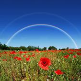 Poppy field rainbow — Stockfoto